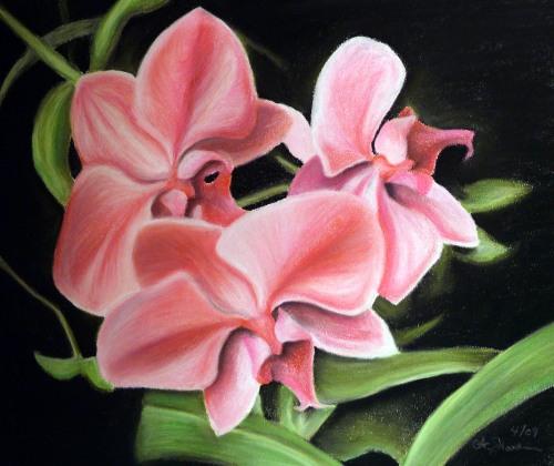 Illustration Friday Fleeting Orchids ©2009 alecia goodman to present