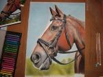 final portrait horse