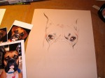dog boxer drawing