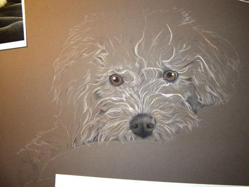 dog drawing portrait