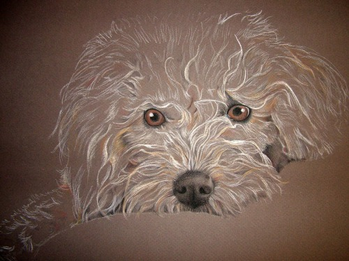 dog drawing pastel