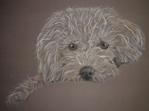 pastel painting dog
