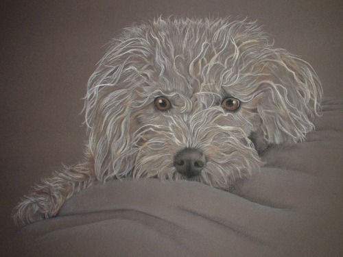drawing dog portrait
