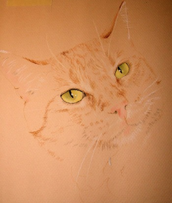 cat pastel drawing