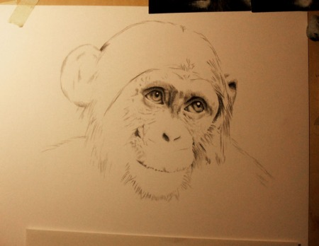 drawing update chimpanzee