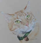 pastel drawing ginger cat
