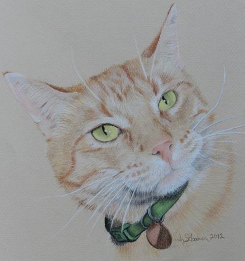 pastel drawing ginger cat