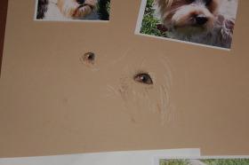 dog drawing pastel