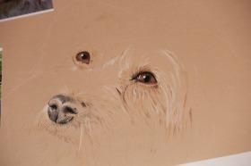 dog pastel drawing portrait