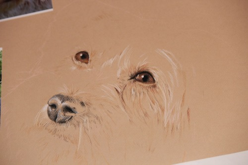 dog pastel drawing portrait