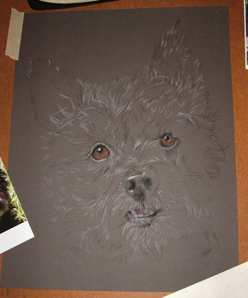 drawing dog pastel painting