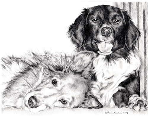 portrait drawing dogs