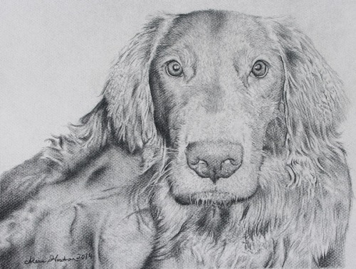 charcoal dog portrait drawing