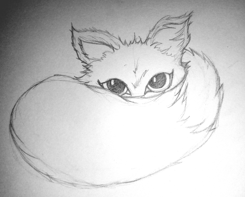 Pencil sketch shy fox