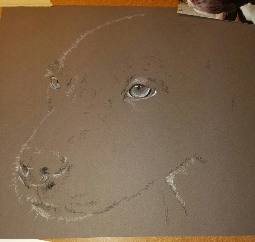Puppy drawing charcoal