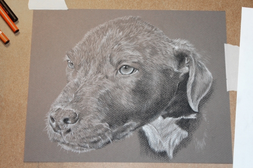 Puppy charcoal drawing