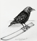 2018 Inktober Day 31 Slice ink drawing of raven standing on a knife by alecia goodman to present