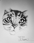 Tabby Cat ink drawing by Alecia Goodman