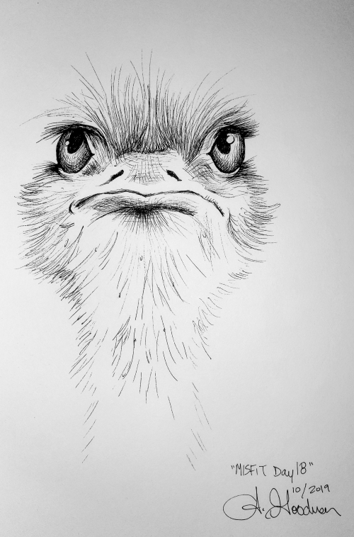 Misfit Ostrich Ink drawing by Alecia Goodman