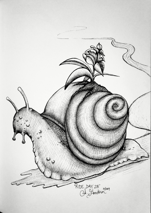 Ink drawing of snail with plant on shell by Alecia Goodman