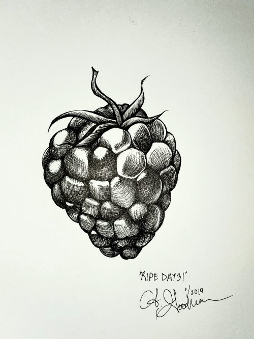 Ink drawing of shiny Black Berry fruit by Alecia Goodman