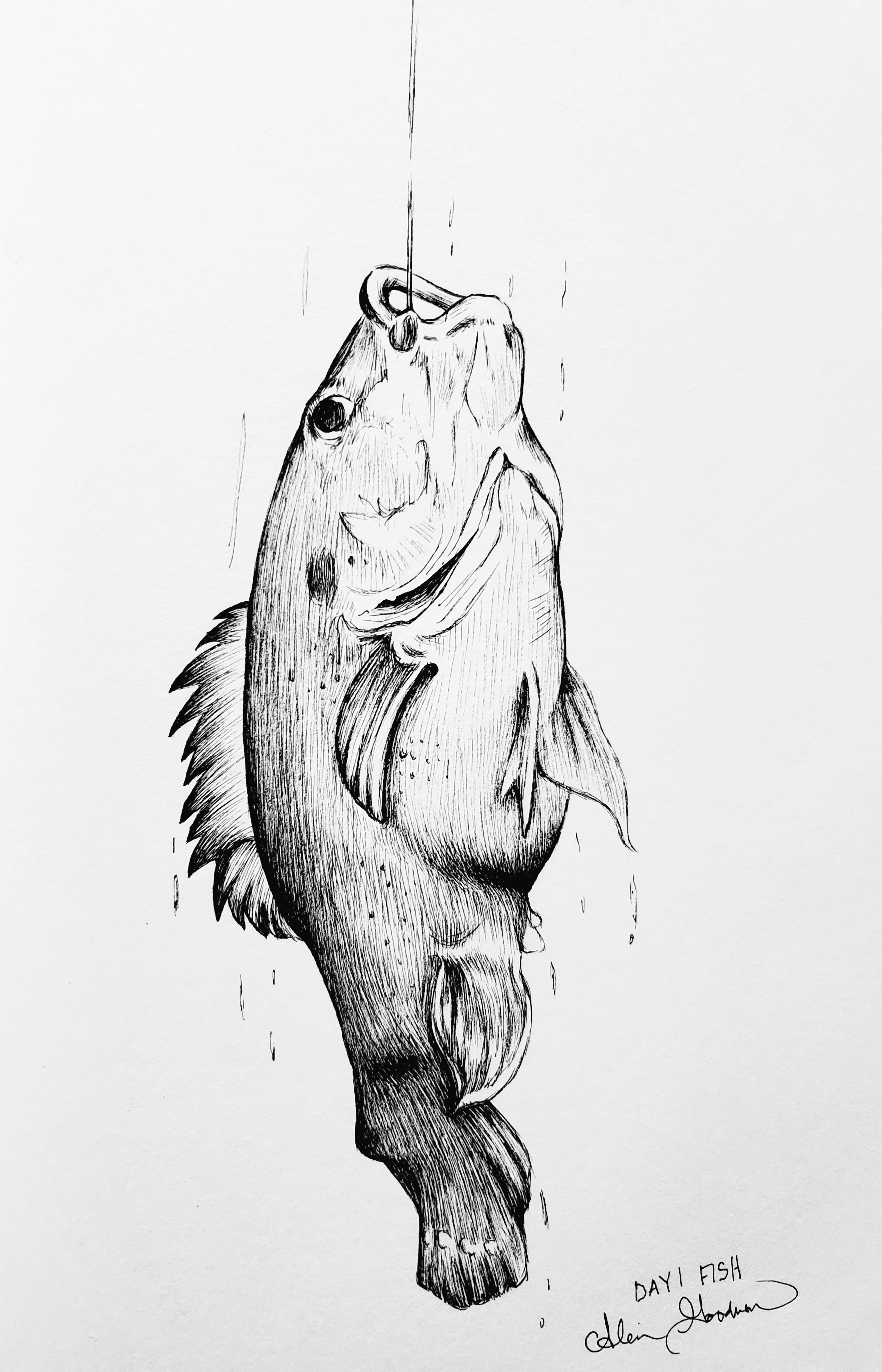 Fish Ink drawing by Alecia Goodman 2020 to present