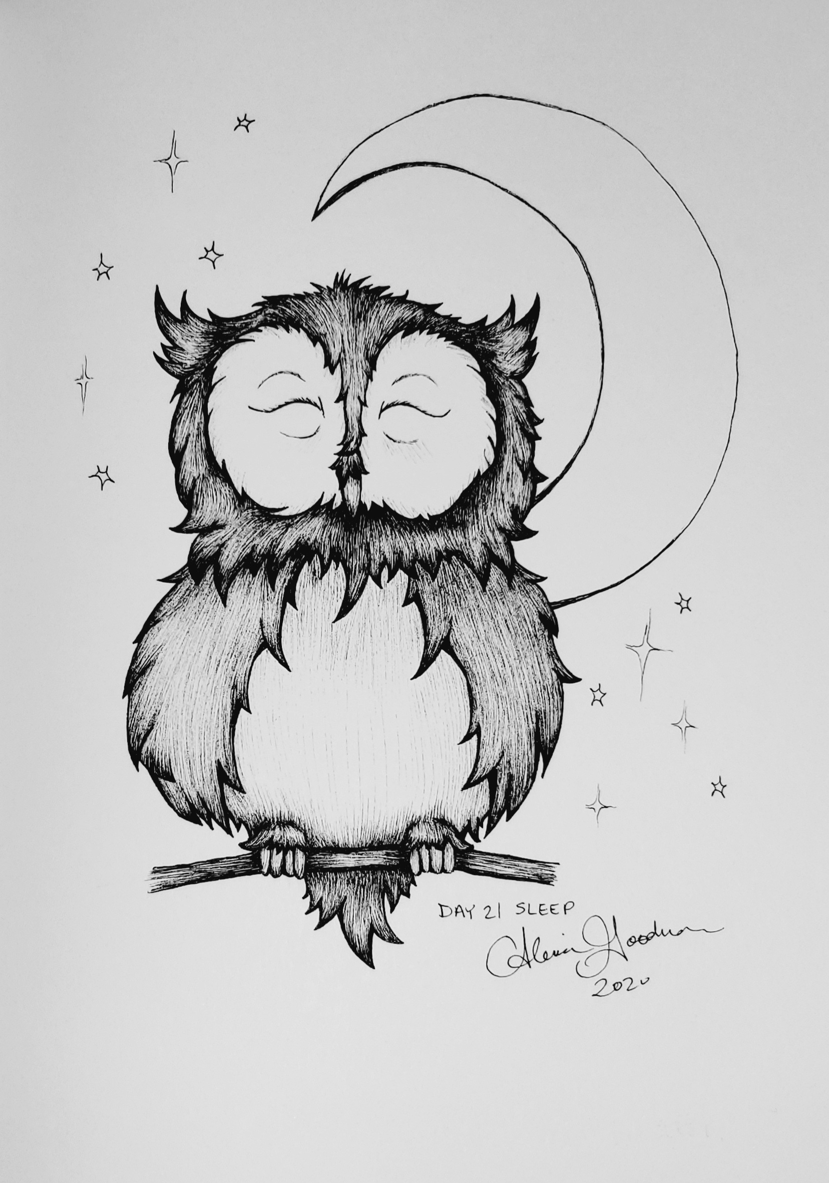 Inktober Day 21 Sleeping owl ink drawing by alecia goodman 2020 to present