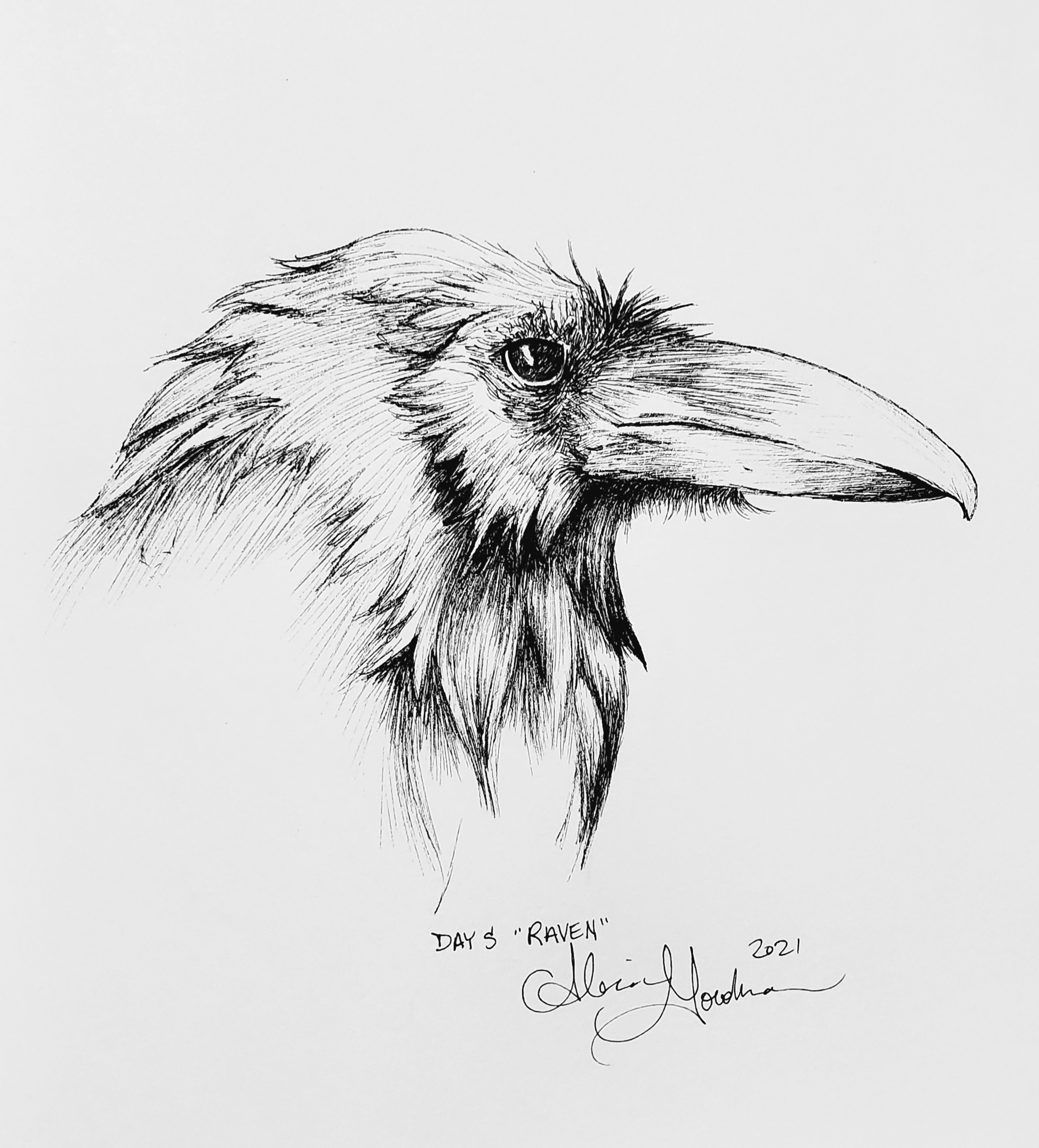 Raven head ink drawing by alecia goodman copyright 2021 to present