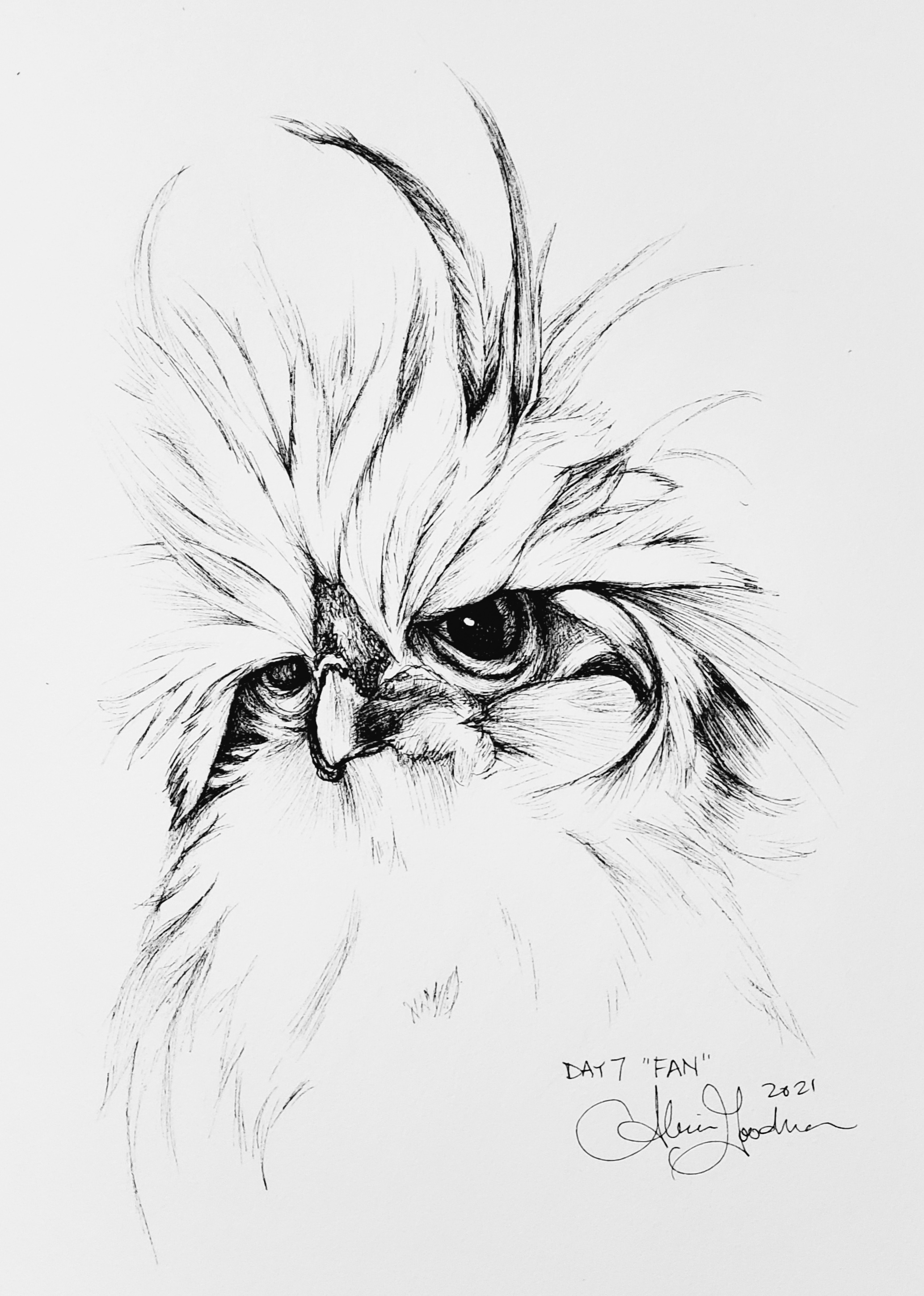 Inktober Day 7 Fan ink drawing of chicken with crazy feathers by alecia goodman copyright 2021 to present